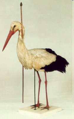 Arrow Stork - pfeilstorch